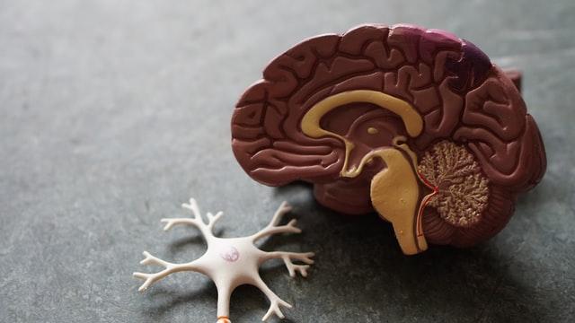 ¿Cómo retrasar el envejecimiento del cerebro?